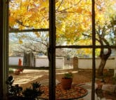 Autumn view from kitchen