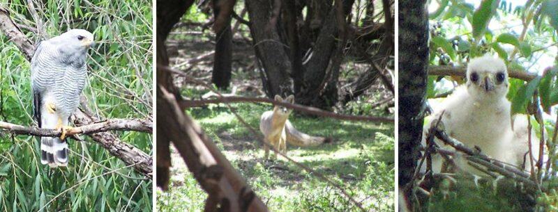 Riparian Animals on Santa Cruz River